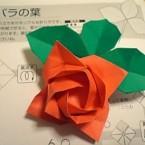 バラの花&葉